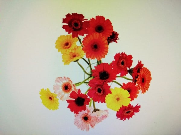 Bild für Gewaltfreie Kommunikation – Blumen in einer Vase